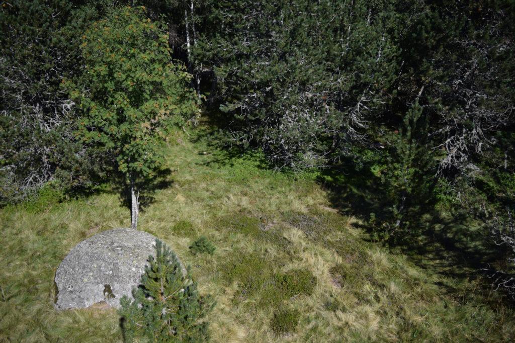 Microhabitat at Mas du Mont Lozère field site
